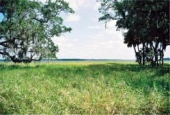 The Prairie of Myakka River State Park looks out to the Myakka Lake