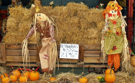 A Fall Pumpkin Fest in Sarasota Florida
