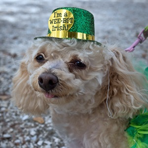Irish Celtic Festival & Lucky Dog Parade
