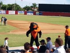Orioles Mascot at Ed Smith Stadium Sarasota Florida