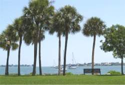 Sarasota Bayfront Park Palms on the Bay