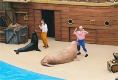 Clyde and Seamore Seal show at Sea world Orlando Florida