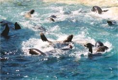 Seal Lion Island at Sea world Orlando Florida
