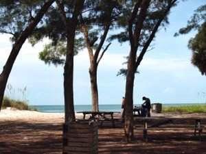 Picnic under the pine trees at Coquina Beach Anna Maria Island