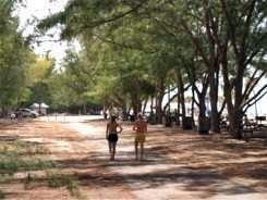 Walking through the pine trees at Coquina Beach Anna Maria Island