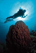 Diving in Sarasota Florida