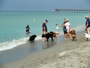 Dog Friendly Beach Venice Florida