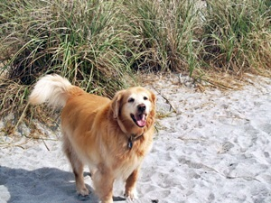 In the sand dunes at Dog Beach aka Broahrd Beach vemice Florida