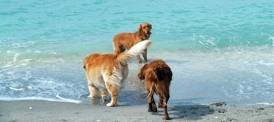 Brohard Beach called Dog Beach Venice Florida