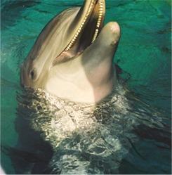 Dolphin Cove at Seaworld Orlando Florida