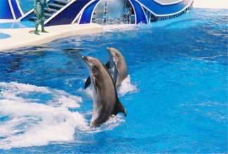 Dolphin Stadium at Seaworld Orlando Florida