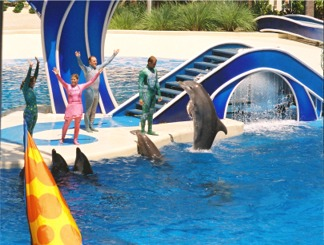 Dolphin Stadium Show at Seaworld Orlando Florida