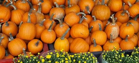 Sarasota Pumpkin fest