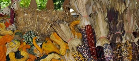 Fall Celebrations in Sarasota Florida