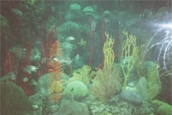 The Coral Reef tank at the Florida Aquarium