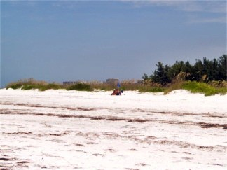The sandy dunes at North Lido Key Beach