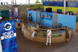 Mote Aquariums contact cove where you can interact with sea life