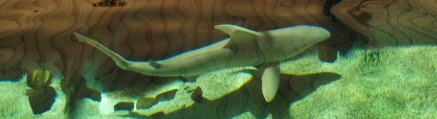 Sharks at Mote Aquarium Sarasot