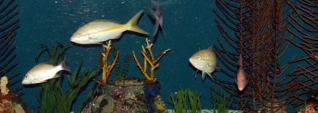 One of the aquarium tanks at Mote Marine Aquarium Sarasota Florida