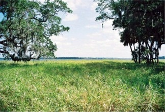 The Prairie of Myakka River State Park looks out to the Myakka Lake