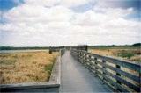The Myakka Park Birdwalk