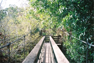 Walking through the Myakka Canopy Walkway