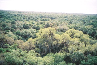 Looking out from the Observatio Tower at Myakka River State Park