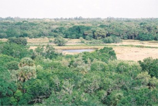 The veiw of Myakka State park from the Observation Tower