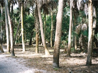 Nature Trail at Myakka State Park Florida