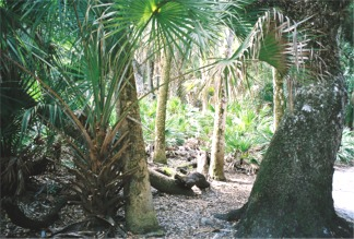 Myakka River State Park Nature Path