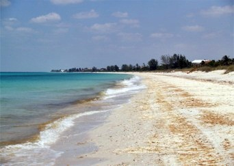 Nokomis Beach North Looking For Sea Shells