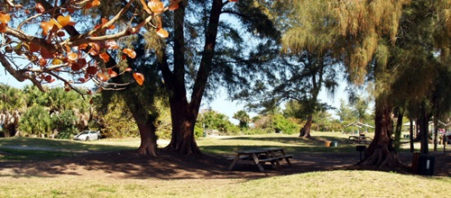 Picnic tables in the shade at North Jetty Park on Casey Key Florida
