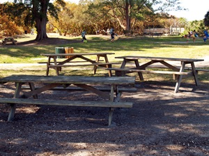 Cluster of picnic tables at North Jetty Park Nokomis Florida
