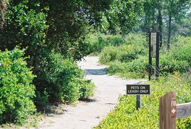 Hiking and biking trail at Oscar Scherer State Park in Osprey Florida