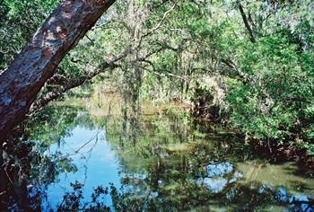 South Creek in Oscar Scherer State Park in Osprey Florida