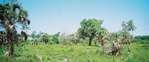 Hiking trails at Oscar Scherer State Park in Osprey Florida