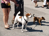 Sarasota Pet Fest