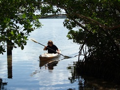 kayak eco-tour at Sarasota's Lido Key