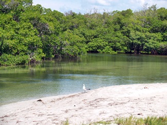 kayaking on a lagoon at Sarasota's South Lido Key nature Park