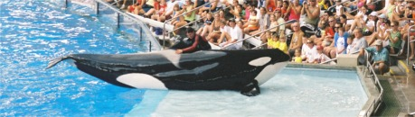 Shamu at Seaworld Orlando Florida