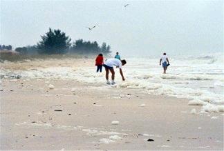 Nokomis Beach after Hurricance Frances