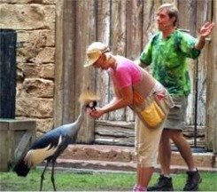 Animal Kingdom Flights of Wonder Bird show