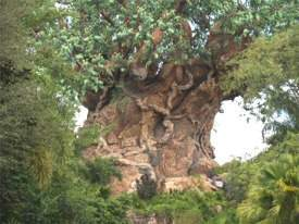 The Tree of Life at Disneys Animal Kingdom Orlando