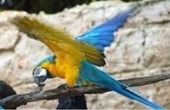 Parrot at Disneys Animal Kingdom Flights of Wonder