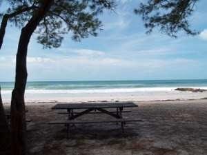 Looking through the pine trees at coquina beach on anna maria island florida