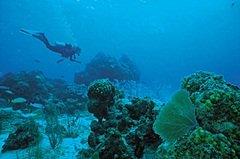 Diving off of Sarasota Florida