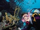 Scuba diving off Sarasota Florida