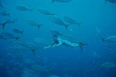 Scuba Diving off of Sarasota Florida