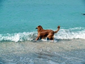 Dog Beach in Venice Florida on the Gulf of Mexico