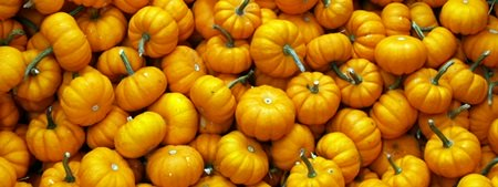 Mini Pumpkins at a Sarasota Pumpkin Fest
